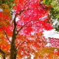 Photos: 赤磐 千光寺の紅葉NO.7