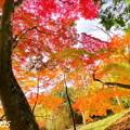 赤磐 千光寺の紅葉NO.8