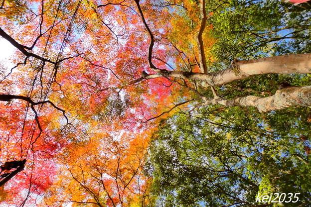 龍泉寺の紅葉