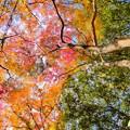 Photos: 龍泉寺の紅葉