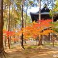 曹源寺の紅葉NO.5