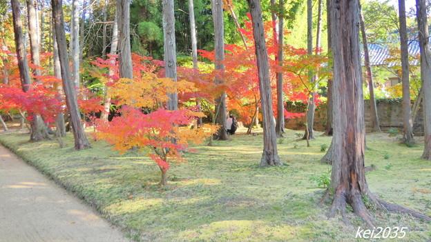 Photos: 曹源寺の紅葉NO.7
