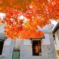曹源寺の紅葉NO.10