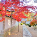 曹源寺の紅葉NO.11