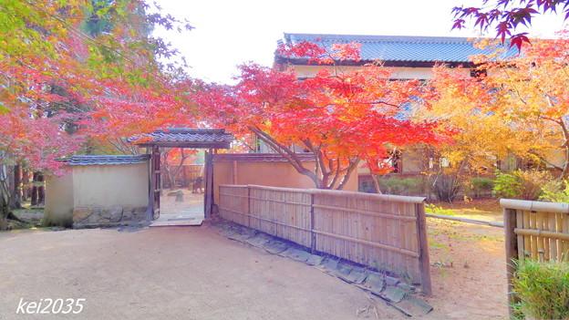 曹源寺の紅葉NO.16