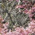 Photos: 春が見えてきた