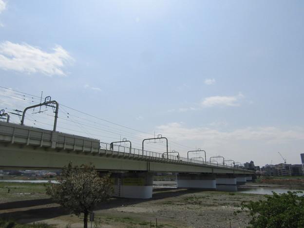 No.215 和泉多摩川の河川敷 その2