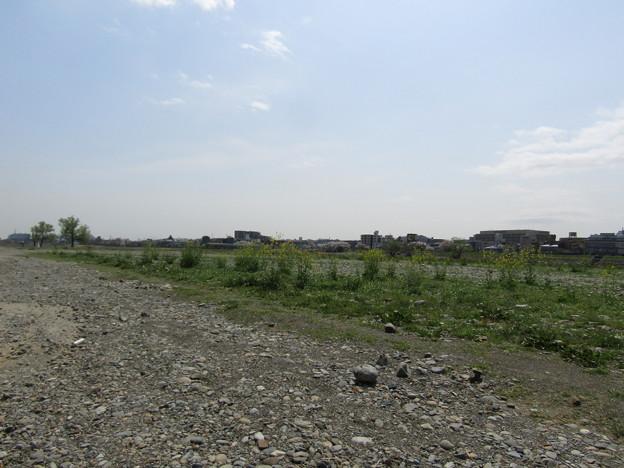 No.218 和泉多摩川の河川敷 その5