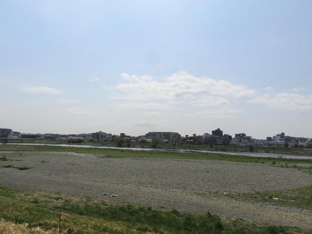 No.220 和泉多摩川の河川敷 その6