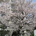 Photos: No.221 和泉多摩川の河川敷 その7