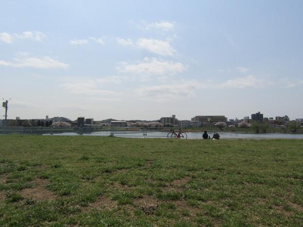 No.223 和泉多摩川の河川敷 その9