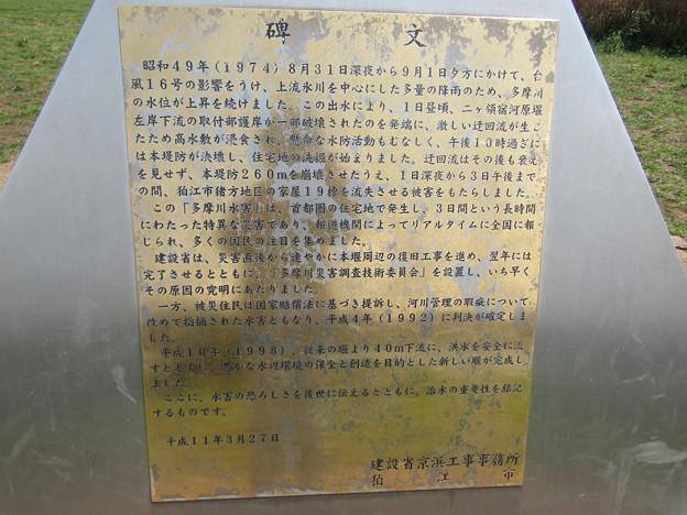 No.226 和泉多摩川の河川敷 その12