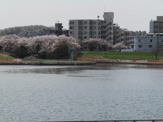 No.229 和泉多摩川の河川敷 その15