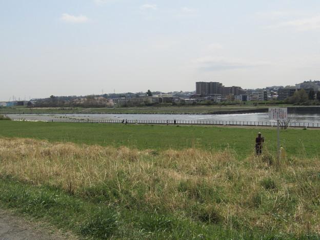 Photos: No.230 和泉多摩川の河川敷 その16