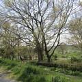 No.231 和泉多摩川の河川敷 その17