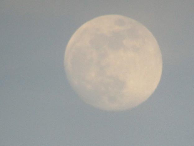 No.366 2020年6月4日 昼間に見える月(18:38頃)