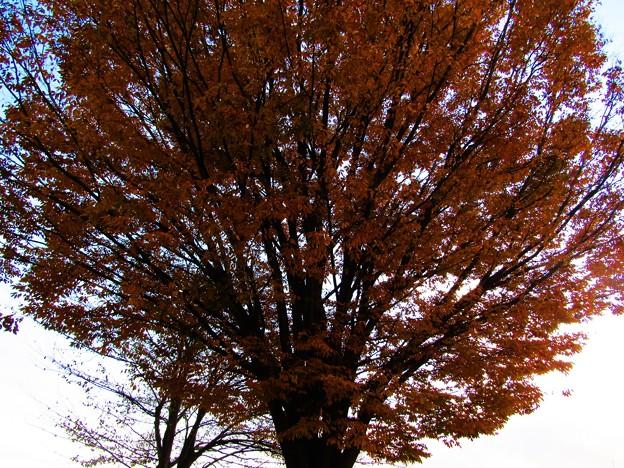 秋の終わり掛け