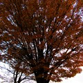 Photos: 秋の終わり掛け