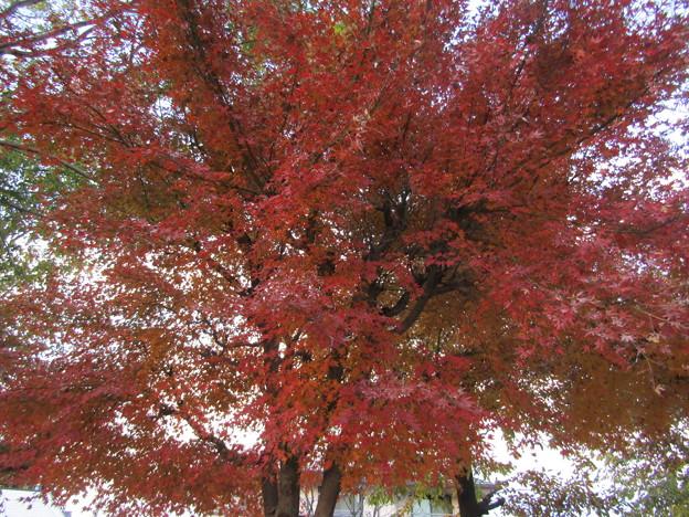 赤がよく似合う季節ですね