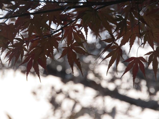 No.663 この葉が散る頃には、何を思っているのだろう
