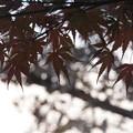 Photos: この葉が散る頃には、何を思っているのだろう