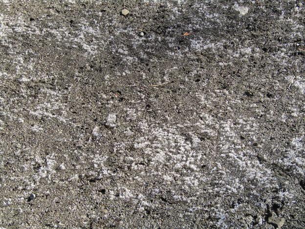 210130_今朝の霜柱(1)