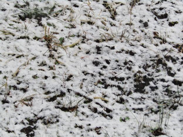 210128_東京で積雪(3)