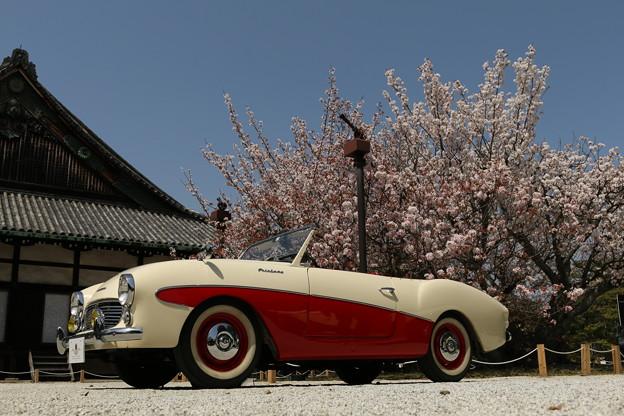ダットサンフェアレデーと桜