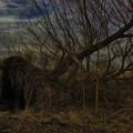 写真: 倒木 (2)