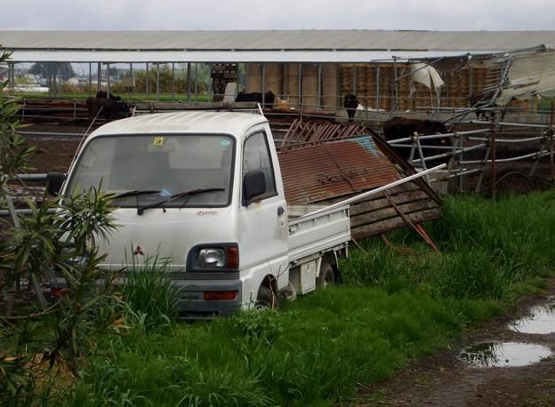 下野の牧場にて