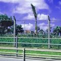 写真: 1986 沖縄 (06)