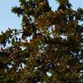 写真: 鳥 (2)