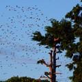 Photos: 鳥 (6)