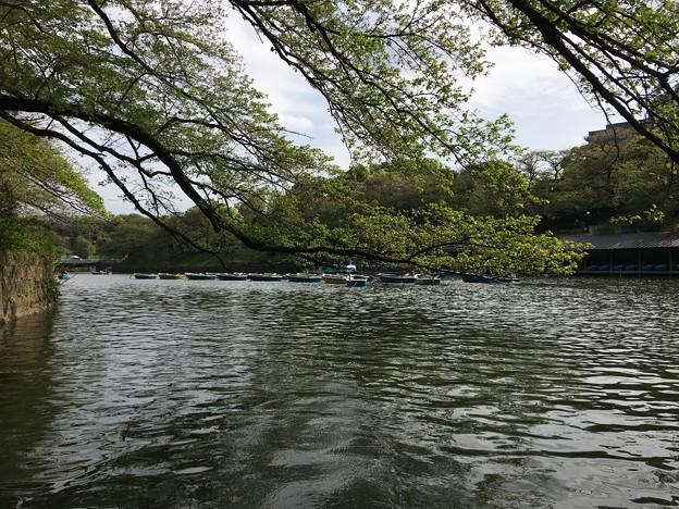 千鳥ヶ淵でボートに (2)