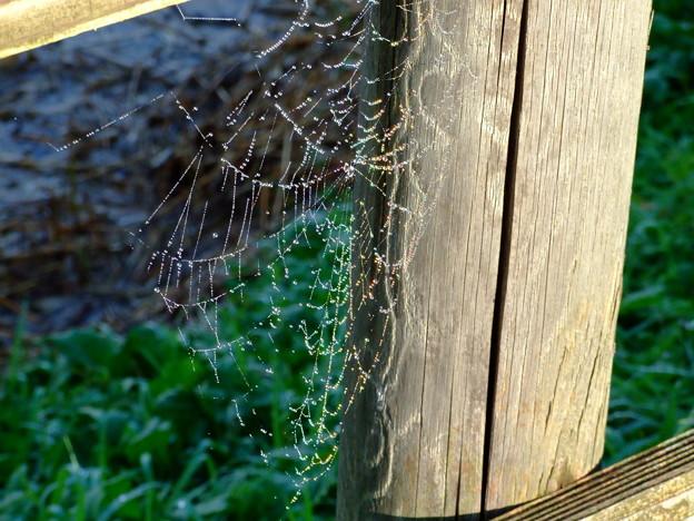 spiderweb  spectrum