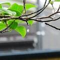 Photos: 雨の日の暇つぶし
