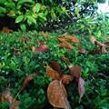 Photos: Fall