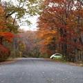 写真: 遅い秋