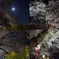 写真: 20180330_夜桜