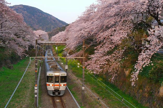 山北駅の桜