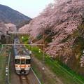 Photos: 山北駅の桜