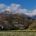 Photos: 実相寺神代桜