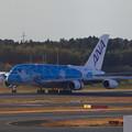 Photos: A380 ホヌ