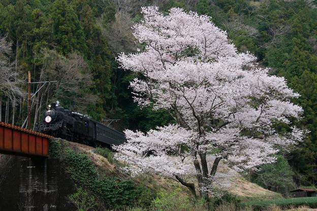 大井川鉄道 SLかわね路号