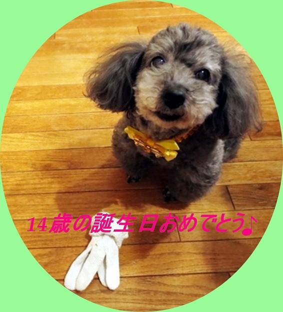 誕生日おめでとう♪