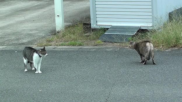 家猫VS野良猫