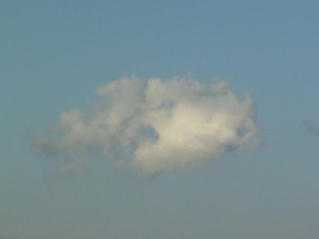 Photos: 金魚雲