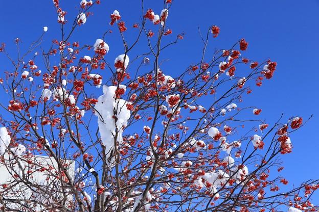 上杉神社_冬の晴れ間2