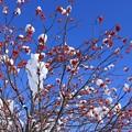 写真: 上杉神社_冬の晴れ間2