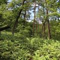 Photos: 20200620かみのやま温泉クアオルト健康ウォーキング 西山コースIMG_0902